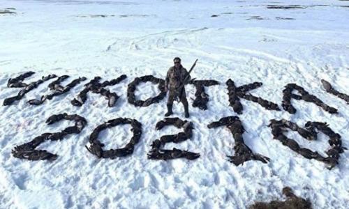 Выложивший трупами птиц надпись «Чукотка 2021» оказался депутатом