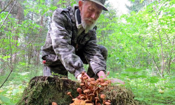 В России дорожают даже грибы в лесу
